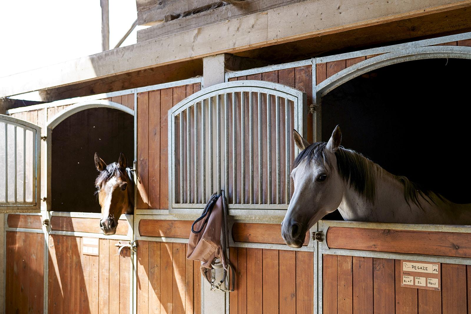 Pension pour chevaux drome